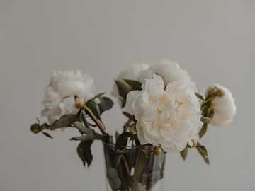white flowers in clear glass vase - Peonies / Pfingstrosen - interior.