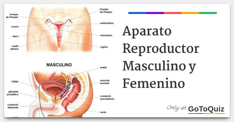 APPAREIL REPRODUCTEUR - APPAREIL DE REPRODUCTION FEMELLE ET MALE (8×4)