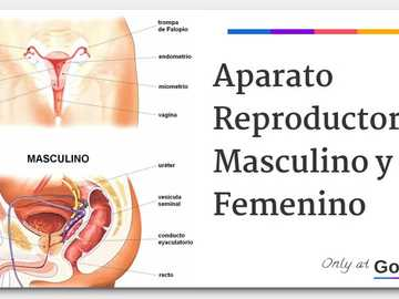 REPRODUCTIVE SYSTEM - FEMALE AND MALE REPRODUCTIVE APPARATUS