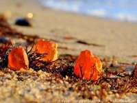 Tesouros da terra - âmbar - Ouro do Báltico - âmbar, pode ser encontrado na praia.