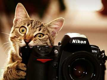 Please smile - Cat, photo camera, animals