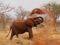 Слон в степта