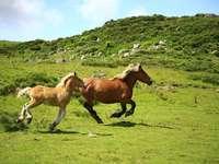 Táj lovakkal