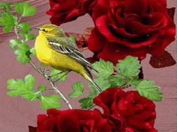 Sikorka . - Titmouse σε ένα τριαντάφυλλο