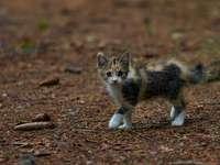 бяла черна и кафява котка на кафява земя