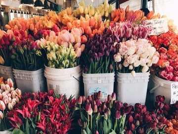 Tulipanes holandeses - Puesto con tulipanes