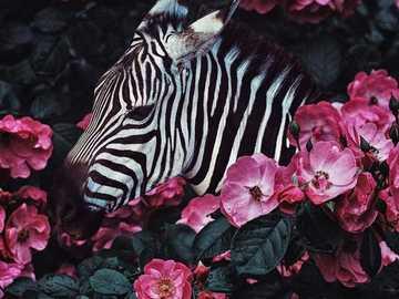 Ζέβρα = ^  - Zebra hidden in the bushes
