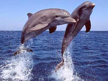 I delfini - Montare il puzzle