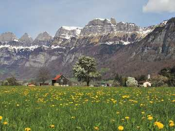 Panorama of the Alps - meadow at the foot of the Alps - dandelion
