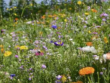 Summer meadow - The picture shows a meadow full of flowers.