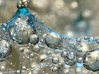 Gotas de rocío sobre una telaraña