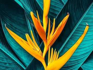 Eine Blume: P. - Exotische Blume auf einem Hintergrund von Blättern