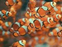 Onde fica Nemo?