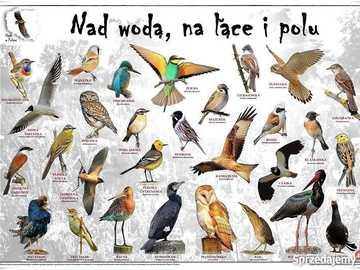 nad wodą, na łące, w polu - różne ptaki które żyją nad wodą, na łące i w polu