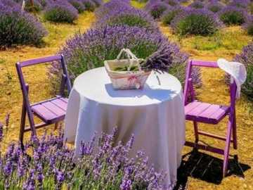 Lavender holidays. - Holidays in Provence.