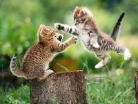 kattlek - små katter leker