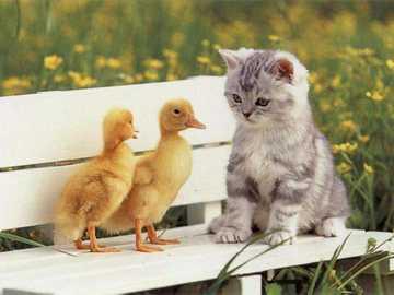 kotek z przyjaciółmi - kotek i dwie małe kaczuszki