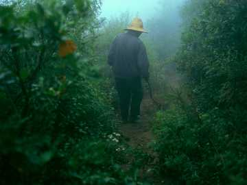 person walking in bushes with fog - Chinese guide goes on a forest trail. China