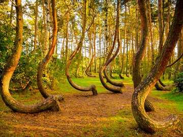 приказна гора - приказна гора с извити дървета