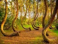tündér erdő