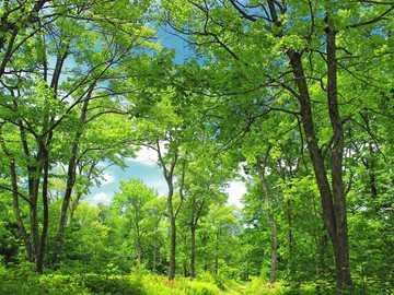 Zielony Las - Piękny, wiosenny, zielony las :))