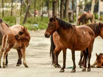 koń na biegunach - stworzony do zabawy w szkole