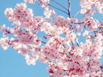 Blumen puzzle - Schaffe das Blumen puzzle in weniger als 10 min