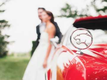 Ślub z czerwonym samochodem - płytka fotografia godła samochodu Jaguar.