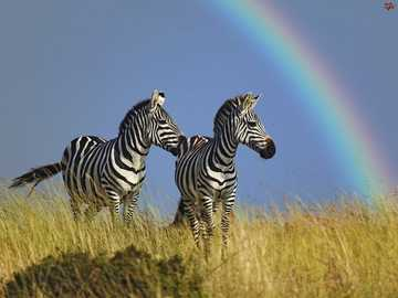 Super views - Beautiful view with zebras and a rainbow :)