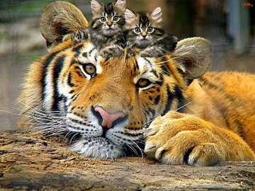 Magic Friendship - Tiger and two cute cats :)