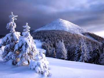 Snowy landscape - Beautiful, fluffy, winter and mountain landscape
