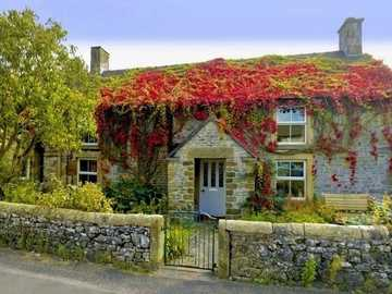 House overgrown with ivy - Ivy House, Garden
