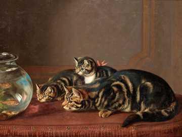 Koty i akwarium - Koty, akwarium, ryby, woda.
