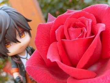 Ookurikara bewundert die Rose - Ookurikara bewundert die schöne Rose