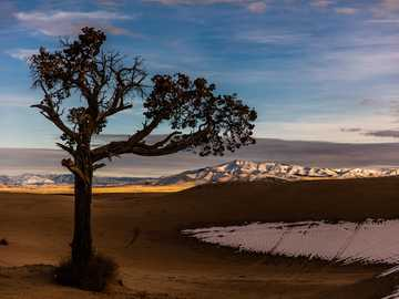 Patrick Hendry - brown leafed tree during daytime. Little Sahara National Recreation Area, United States
