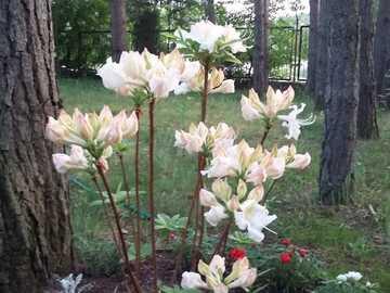 weiße Blumen - weiße Blumen auf dem Grundstück