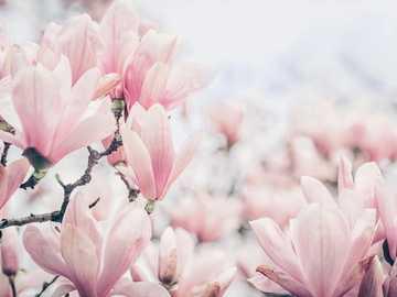 Helle Magnolie - Schöne Blumen. Sehr einfaches Puzzle aus 6 Elementen.