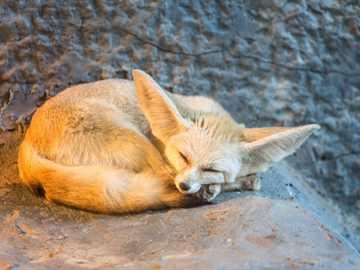 Fennec fox - Puzzles made by me, have 40 elements of easy difficulty.