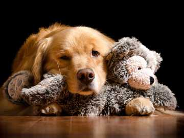 A dog with a mascot - A sweet retrieven with a stuffed pooch