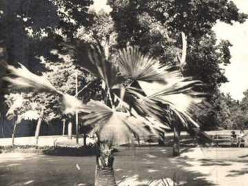 náš krásný park v Chomutově kdysi - náš krásný park v Chomutově kdysi
