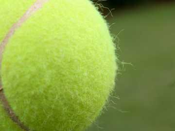 Tennis ball garden game - green tennis ball in close up photography.