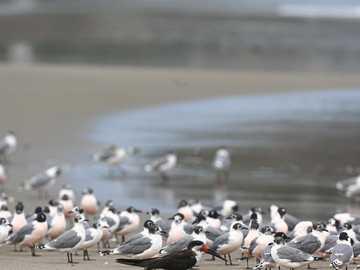 graziosi uccellini - ora è vuoto dal coronavirus