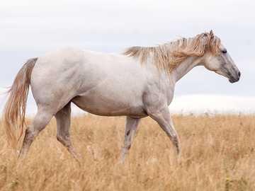 Konie są super - Zachęcam do jazdy na koniach.