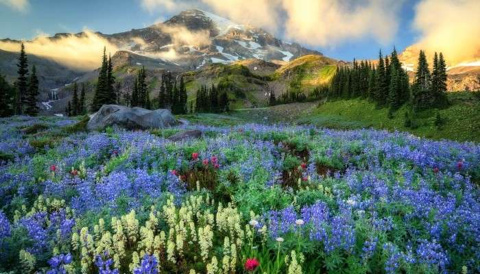 blumenwiese auf einem hintergrund der berge  löse
