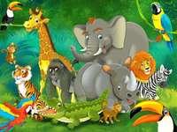 Jungle Állatok