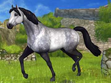 Connemara - Piękny koń podobny do kucyka. Zdjęcie z gry Star Stable Online.
