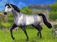Connemara - Krásný kůň podobný poníkovi. Obrázek ze Star Stable Online.