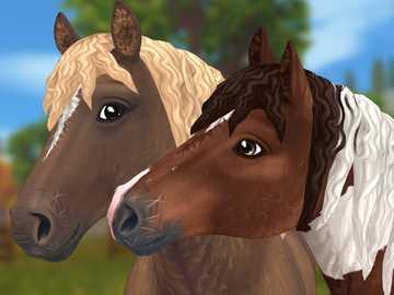 Najbardziej puszyste konie w historii - Oto miękkie niczym pluszowe misie konie. Szkoda że nie można ich dotknąć. Zdjęcie zrobione pod