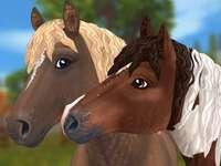 Načechrané koně vůbec - Zde jsou koně jemní jako medvídci. Je to škoda, že se jich nemůžete dotknout. Snímek poříz