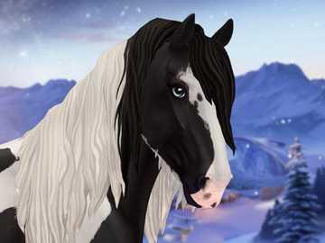 Cob irlandzki - łatwy - Oto Cob irlandzki na zimowym tle. Zdjęcie z gry Star Stable Online.